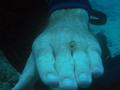 Small crab on Johns hand