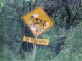 warning sign about cows on the road