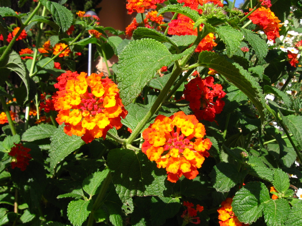 Pretty Red and Orange Flowers